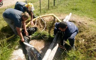 Bomberos de San José rescataron un caballo