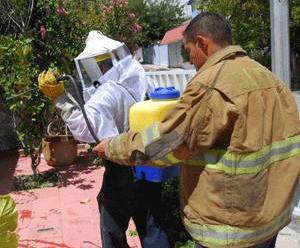 Tres bomberos y un civil fueron atacados por enjambre de abejas