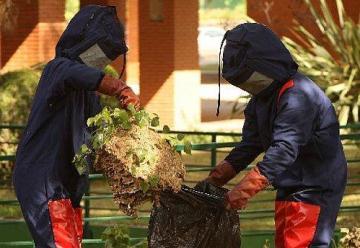 Dos bomberos ingresados en hospital al picarles unas 100 avispas en Ceuta
