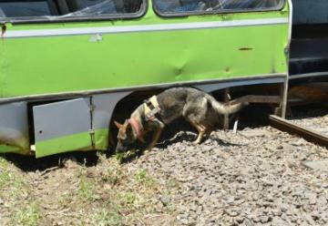 Murió India, la perra bombera de Malvinas Argentinas