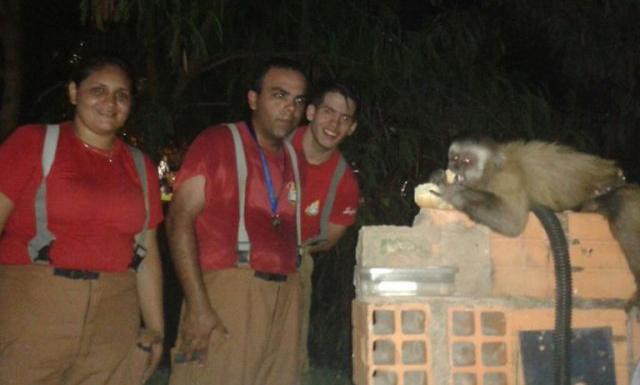 Bomberos Voluntarios rescatan a un mono en Lambaré
