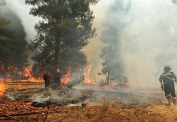 Detienen a capitán de Bomberos acusado de iniciar incendio forestal en Curanilahue