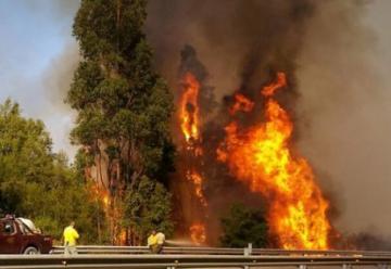 Incendio forestal avanza sin control: evacuan viviendas cercanas