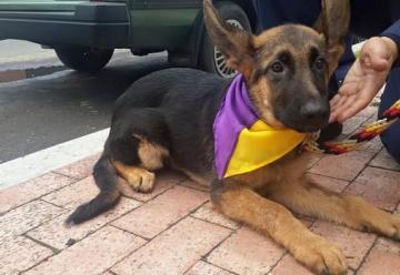 Jacobo II es el nuevo perro de rescate de los Bomberos de Bogotá