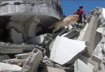Dayko salvó 7 vidas antes de perder la propia