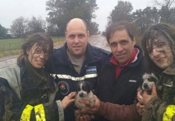 Bomberos Voluntarios rescataron de un zanjón a dos perros pequeños
