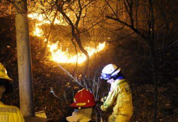 Bomberos siguen luchando contra incendio forestal en Cerro Azul