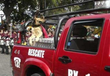 """La historia de """"Capitán"""", el perrito bombero que fue envenenado"""