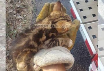 Bomberos rescatan a gatito en incendio en Guanacaste