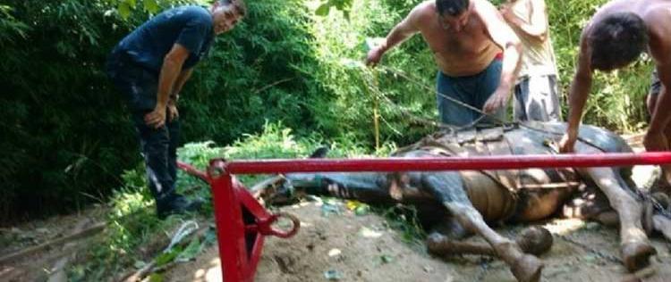 Los bomberos rescataron a un caballo que se había caído en un pozo