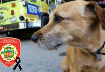 Murió Antonio, el perro de los Bomberos de Ibagué