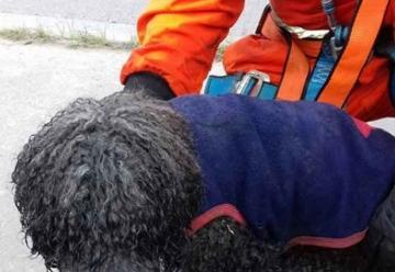 Bomberos de Yerba Buena rescataron un perro de un canal
