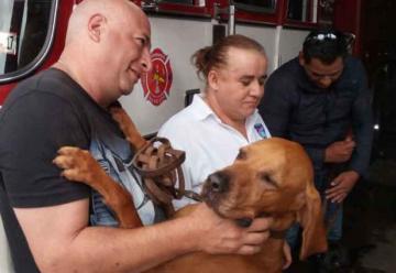 Reciben entre aplausos a bomberos y héroes caninos rescatistas