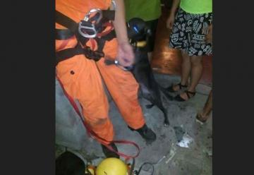 Perrita agradece con euforia a bomberos que la rescataron de un pozo