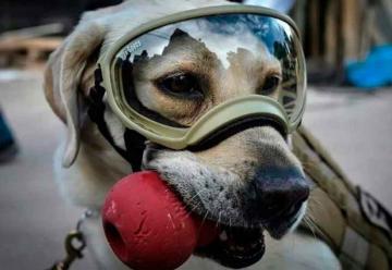 Bomberos del Sur de Sonora tendrán perro de rescate