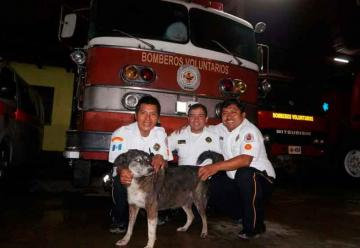 Falleció Pitufa, la perrita rescatista de los Bomberos Voluntarios