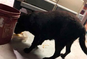 Bomberos rescataron una perrita de la barranca del Carcarañá
