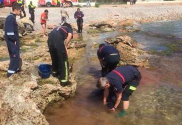 Bomberos rescatan a un delfín varado en la playa de Benicarló