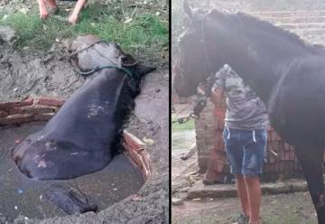 Bomberos de San Genaro rescataron a un caballo que cayó en un pozo