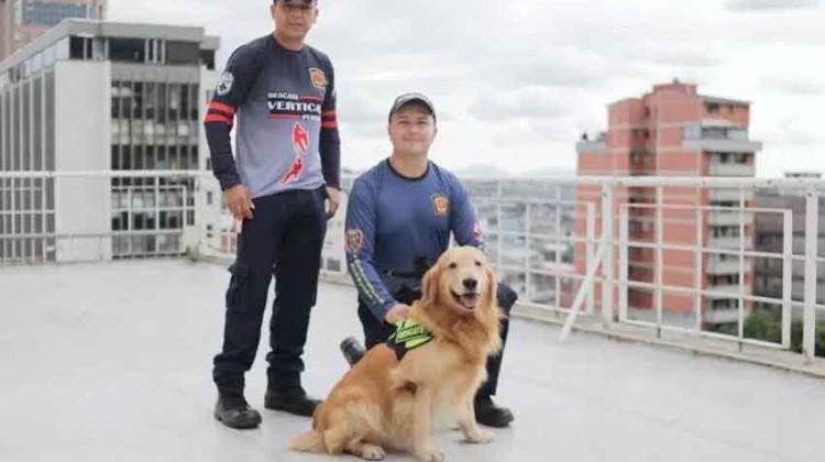 Perros de Bomberos que participan en rescates