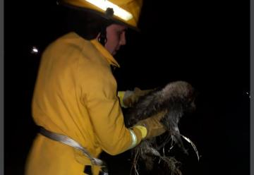 Bomberos rescató a un perrito que había caído al canal