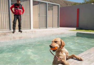 Siete canes se preparan en Quito para ser bomberos