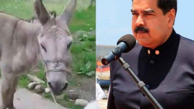 Arrestan a dos bomberos por comparar a Maduro con un burro
