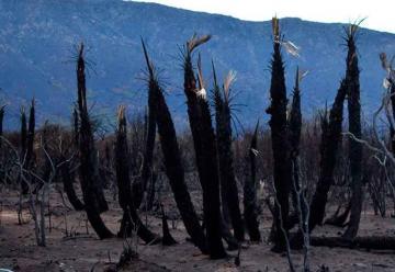 Lograron extinguir el incendio en Papagayos en San Luis
