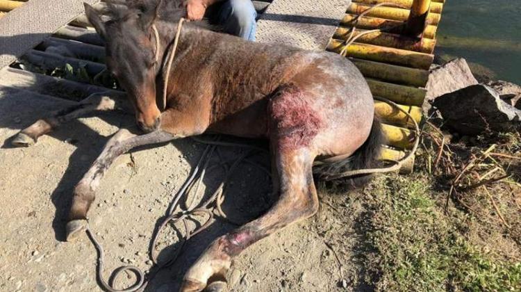 Bomberos liberan a un caballo atrapado en una alcantarilla
