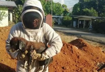 Bomberos de Chiriquí rescatan a perro atacado por abejas africanizadas