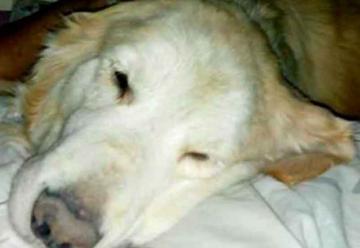 Bomberos lamentó la muerte de uno de los perros del grupo K9