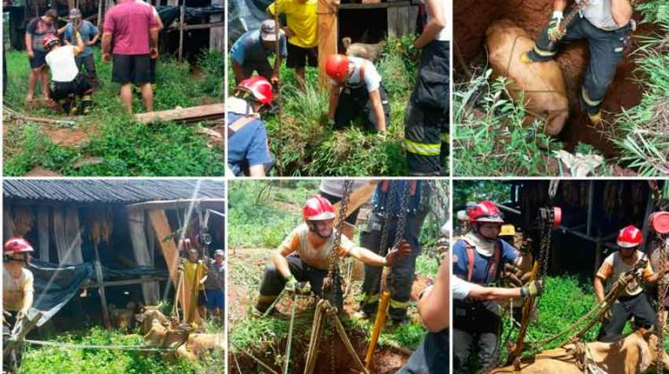 Bomberos de El Soberbio rescatan a vaca que cayó a un pozo