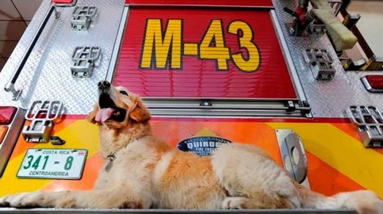 El perro que estuvo en terremoto de Haití será recordado por su heroísmo