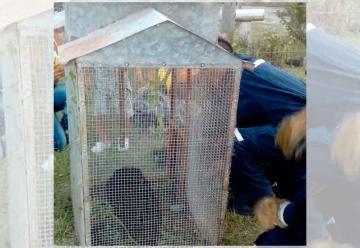 Bomberos Voluntarios rescataron un mono en Calchaquí