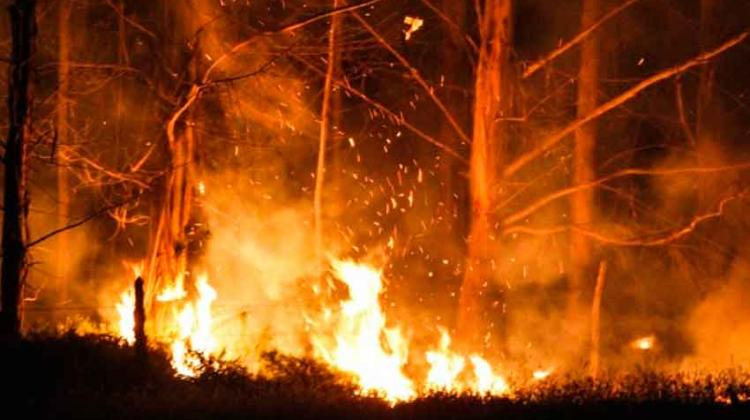 Cuatro Bomberos lesionados por incendio forestal.