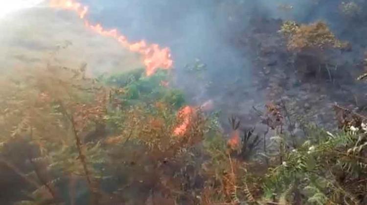 Mueren dos voluntarios que ayudaban a extinguir incendio forestal