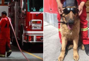 Denuncian que envenenaron a perros de los Bomberos para robar