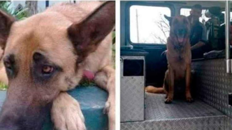 Se perdió el perro de los Bomberos Voluntarios de Almirante Brown