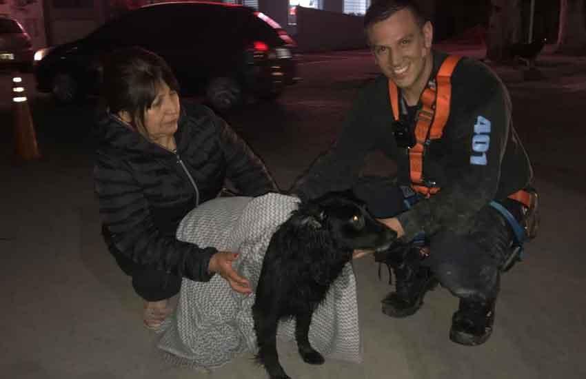 Bomberos salvaron a un perro que cayó a un desagüe