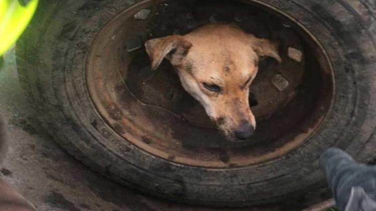 Rescataron un perro que quedó atrapado en una llanta