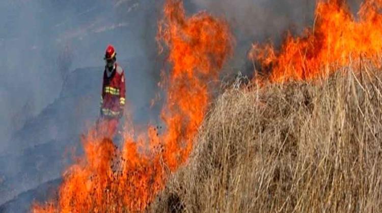 Promueven crear brigadas de bomberos forestales por regiones