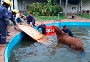 Bomberos rescataron a un caballo que cayó a una pileta