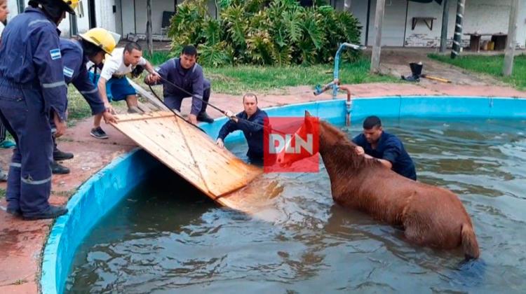 Bomberos de Brandsen rescataron a un caballo que cayó a una pileta