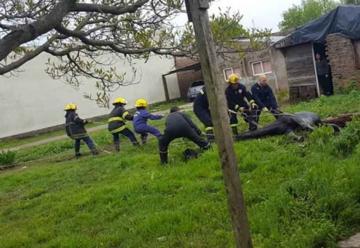 Bomberos rescataron a un caballo que cayó en un pozo