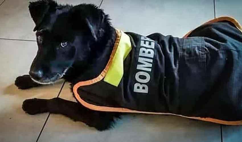 Bomberos rindieron último adiós a mascota de la Bomba España