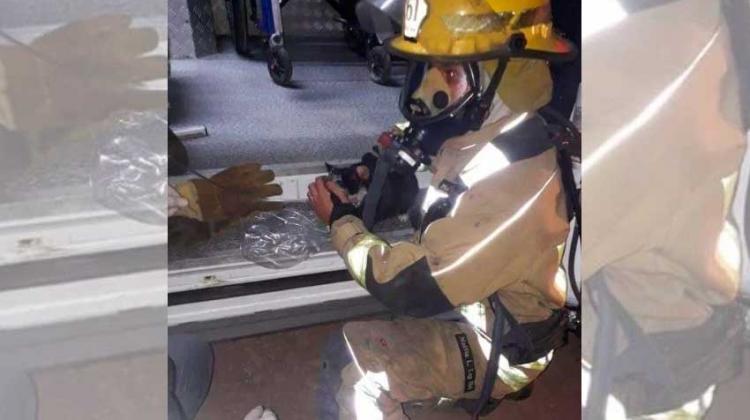 Un bombero de Luján rescató a un gato de un incendio
