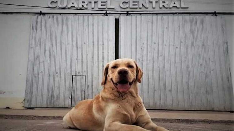 Tupac: El primer perro certificado del Chaco para la búsqueda de personas