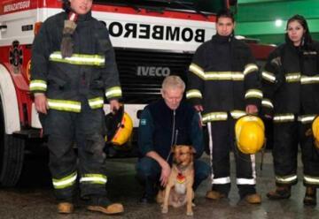Murió atropellado el perro «bombero» del cuartel de Berazategui