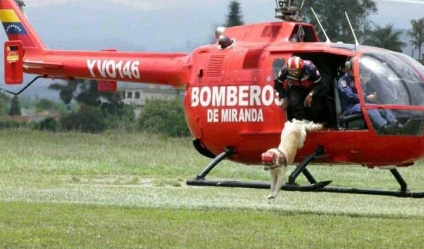 Falleció el perro rescatista de los Bomberos de Miranda