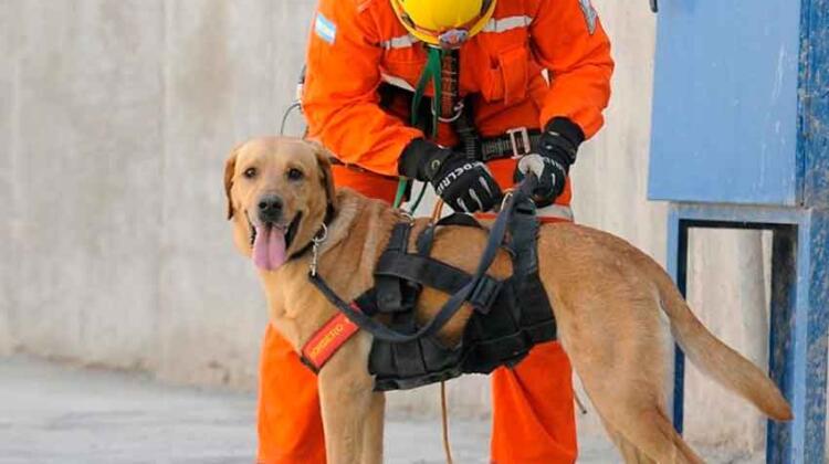 Un bombero perdió a sus perros adiestrados en el incendio de su casa
